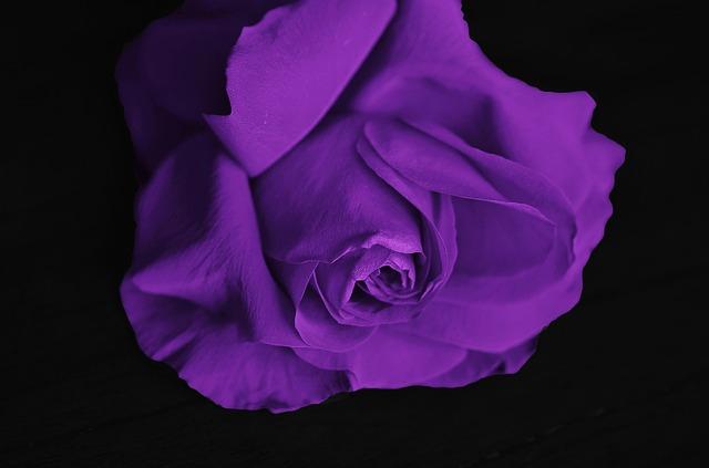 roses-292595_640